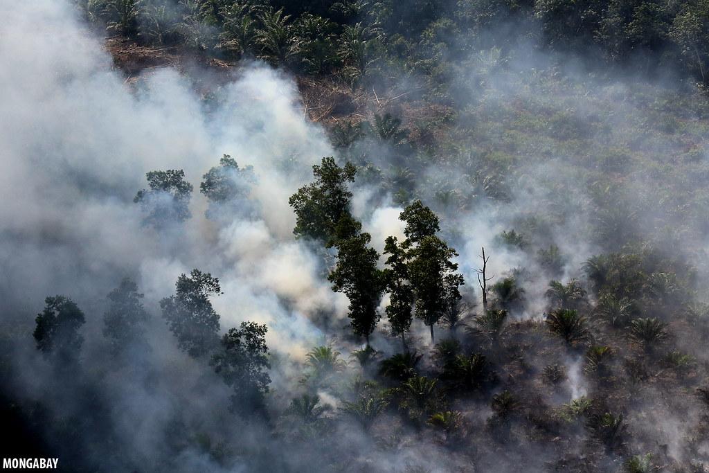 大火燒過森林與油棕園