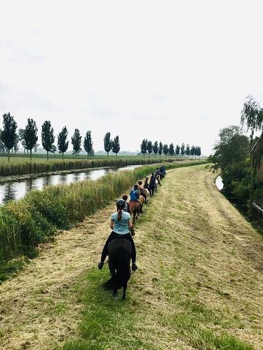 Voor een buitenrit door de polder op een IJslands paard mail naar: avanpraags@hotmail.com