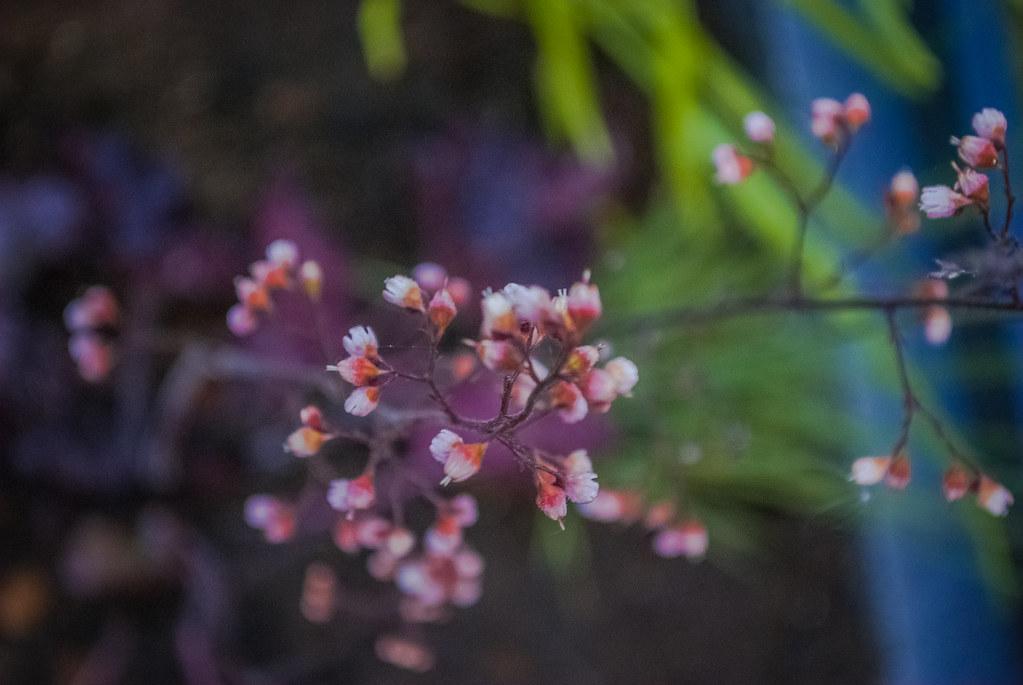 Pretty flowers 20:44:07 DSC_7497