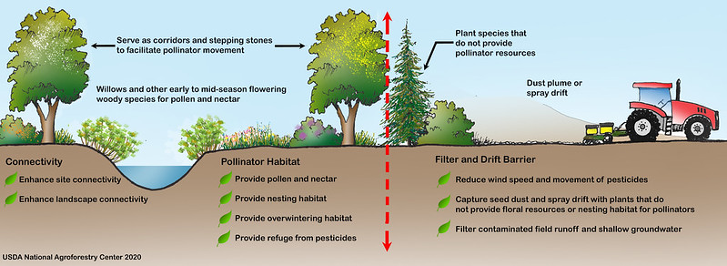 Diagram illustrating typical functions that a generic agroforestry practice can provide to pollinators
