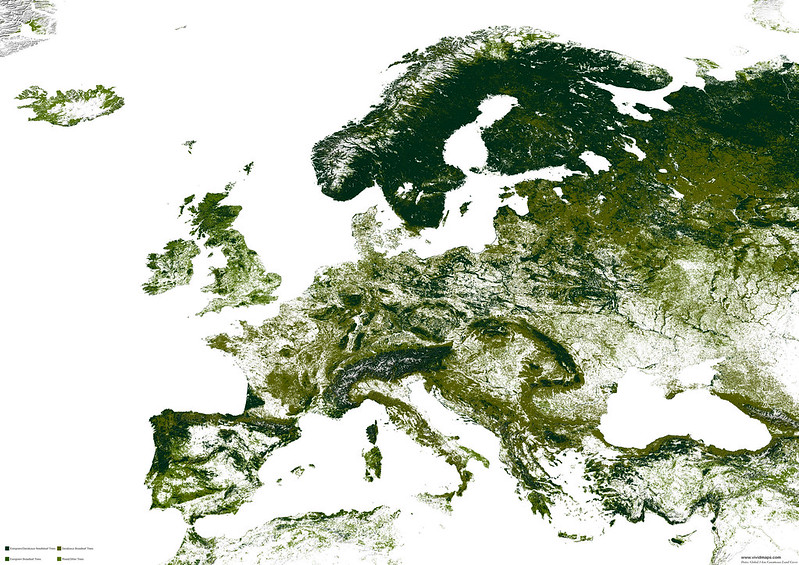 Forests in Europe