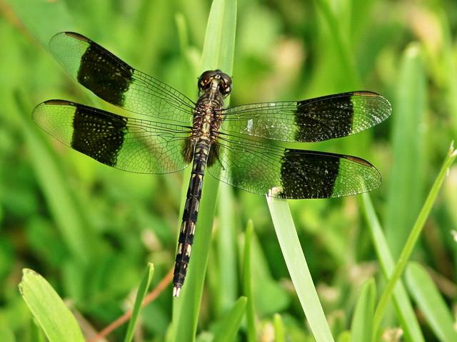 Dragonfly 01-202008120