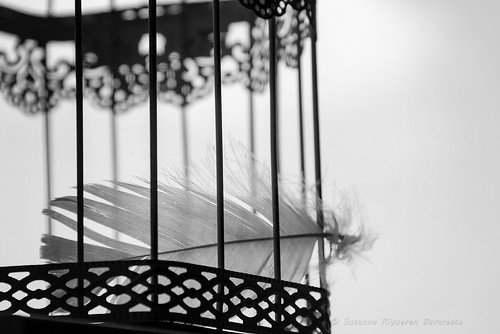 Feather in cage