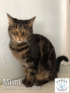 MIMI    Female  12 yrs | by carescatshelter