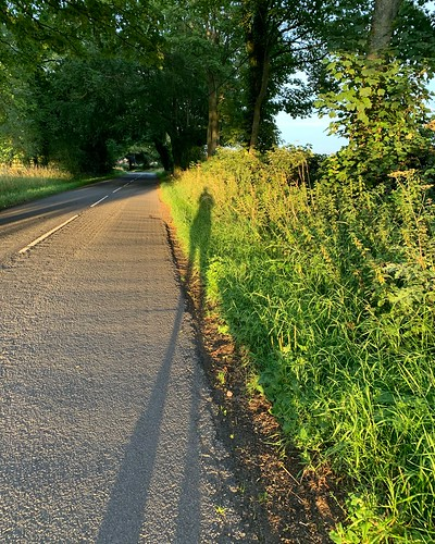 teesdale whorlton shadows road summer evening photoscapex dog walk self shadow