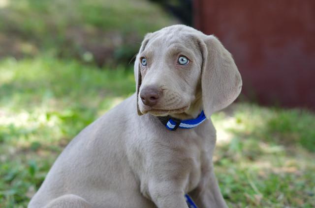 Those beautiful eyes