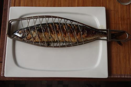 Gegrillte Makrele (noch in der Fisch-Grillzange)