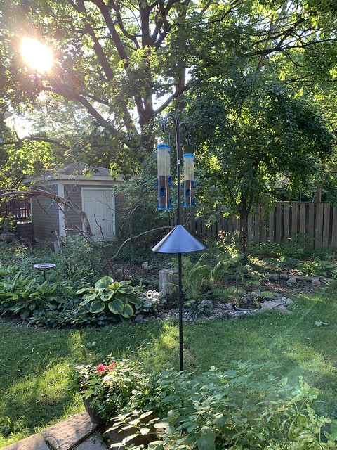 New bird feeders are officially installed