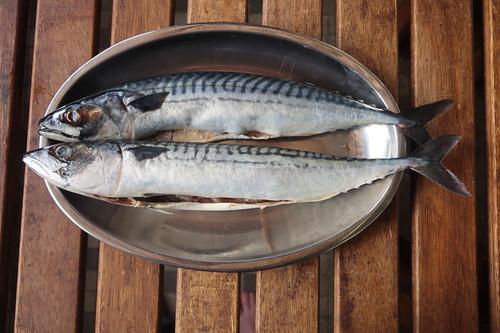 Zwei küchenfertige Makrelen vom Fischstand auf dem Donnerstagsmarkt