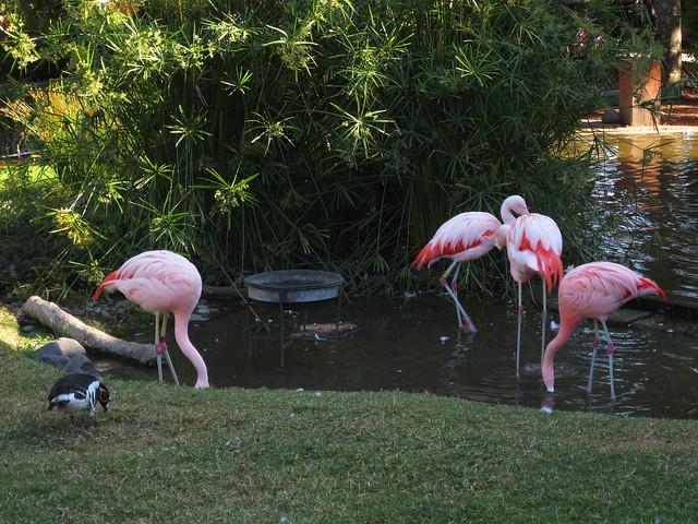Wildlife Safari IMG_5625