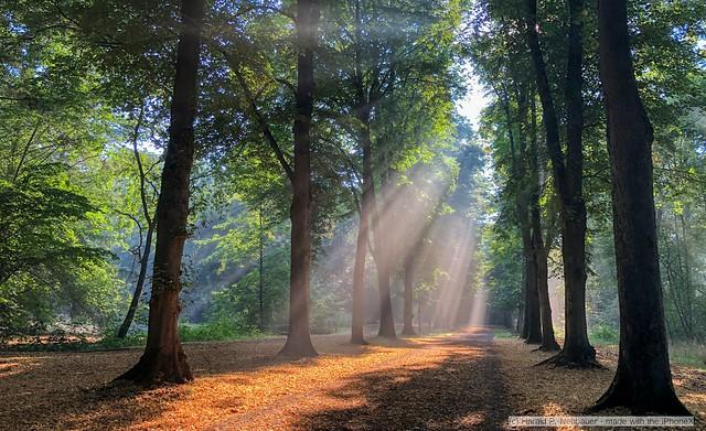 Indescribably beautiful - Bürgerpark Bremen - iPhoneX