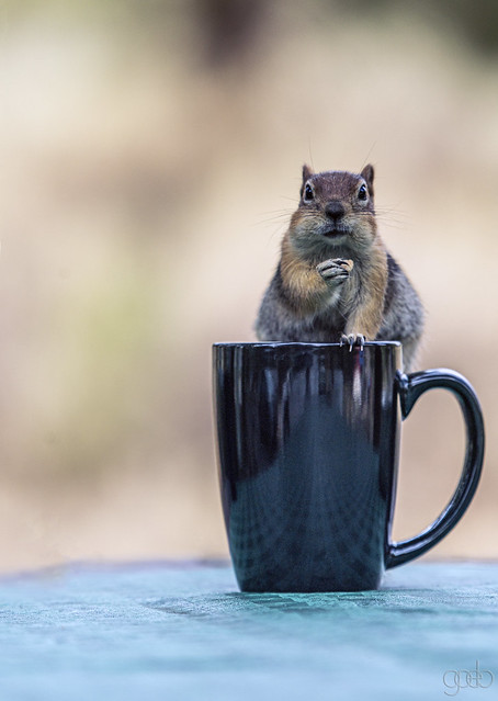 So it was you that put raisins in my coffee!