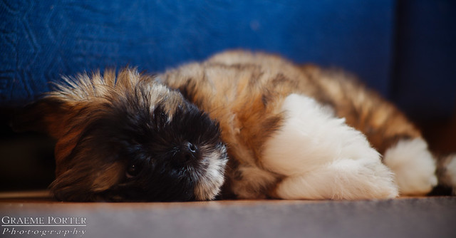 Let Sleeping Dogs Lie - EXPLORED - IMG_4490 - Edited