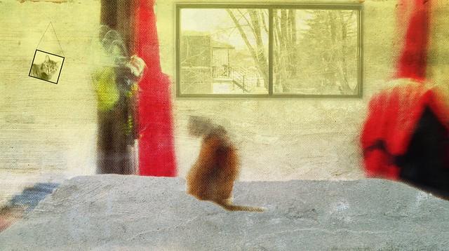 Chat sur un lit brûlant en période de canicule. Ver. 2
