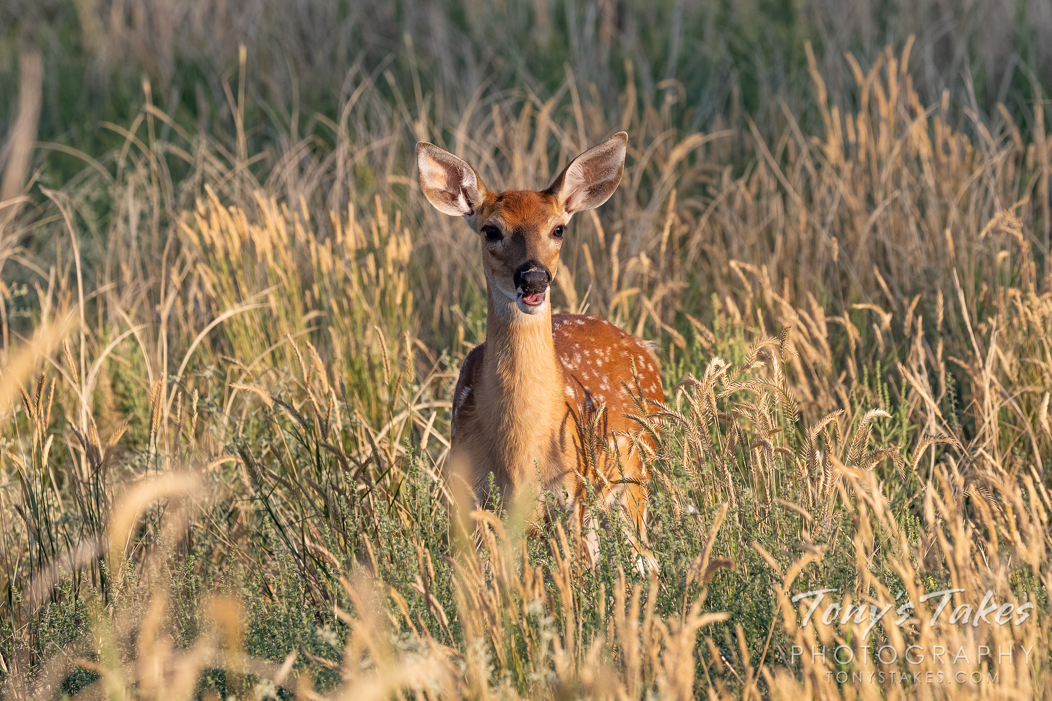 Bambi gives a big smile