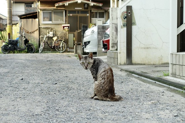 Today's Cat@2020ー08ー21