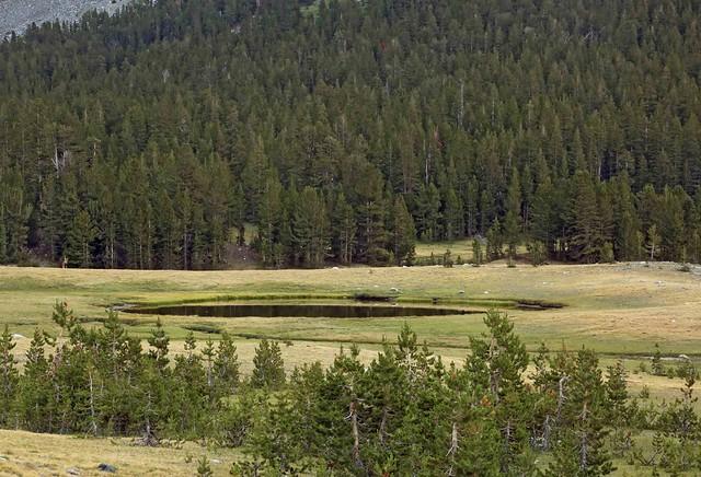 Kettle in Dana Meadows