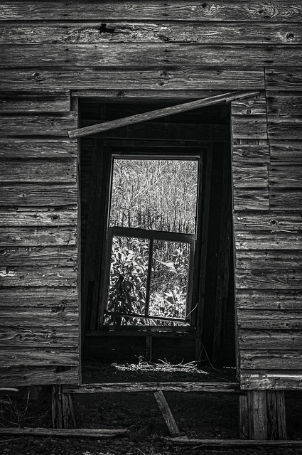 Window to the weeds
