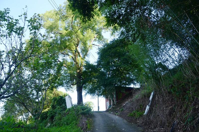 大樟樹登山口