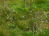 Černohorské rašeliniště, foto: Petr Nejedlý