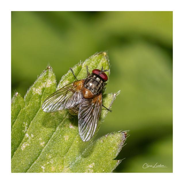 British Invertebrates