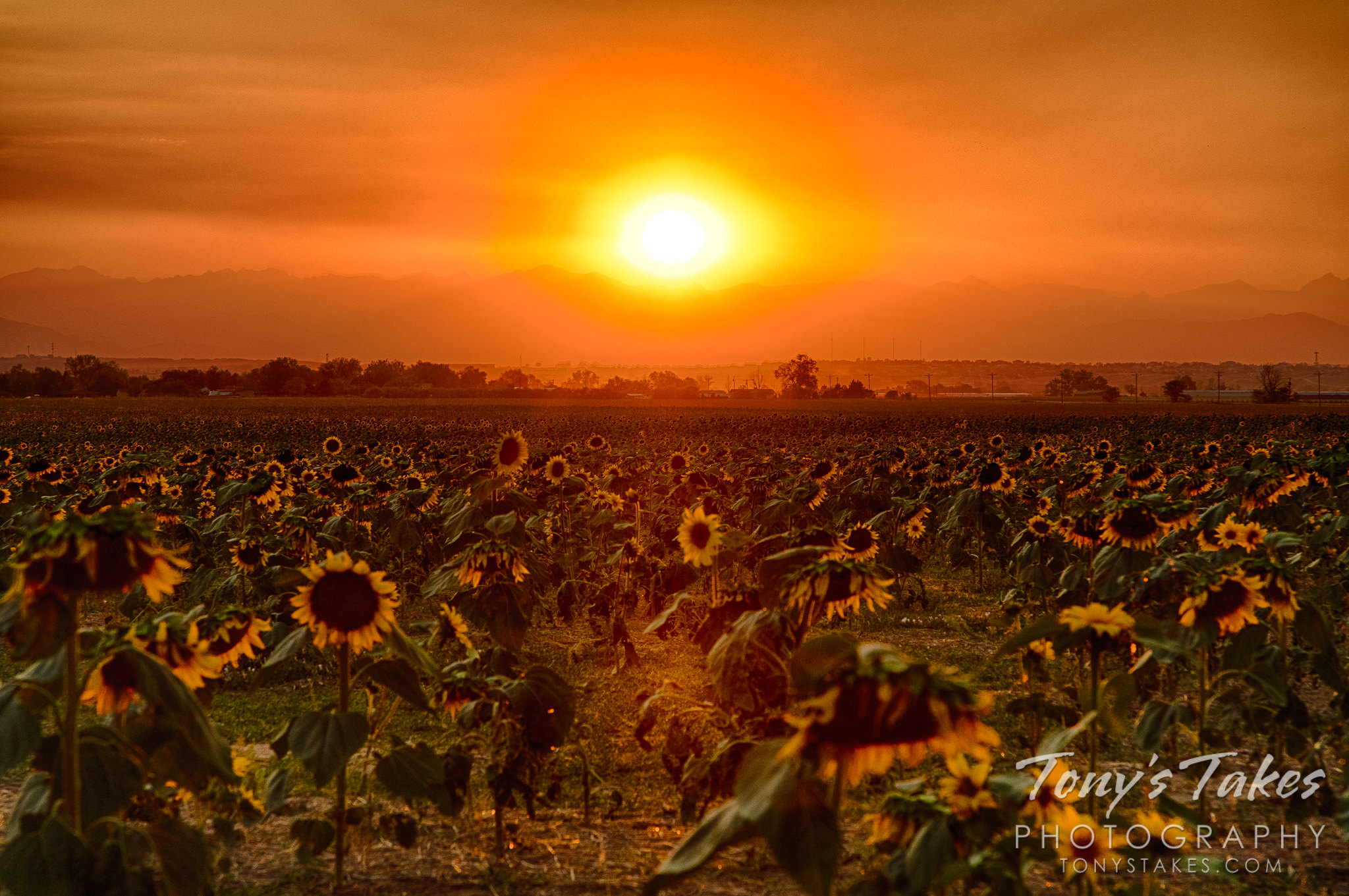 Sunflowers, sunset and smoke