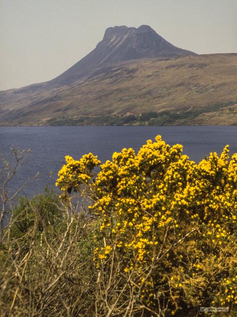 Gorse in full bloom, Loch Lurgainn and the mountain, Stac Pollaidh.