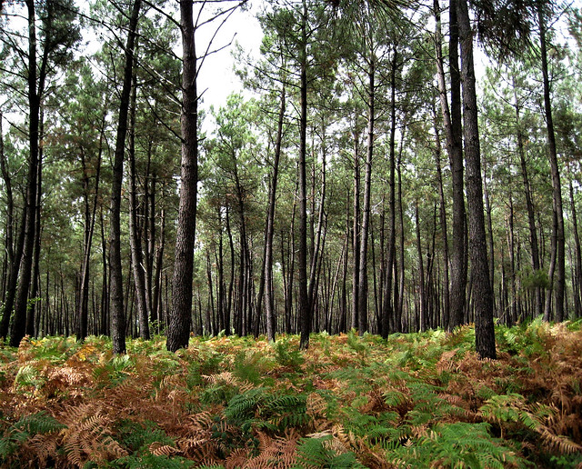 Forêt de Moulière, France.