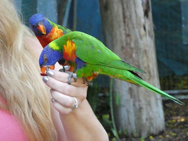 Nassau - Ardastra Gardens and Zoo