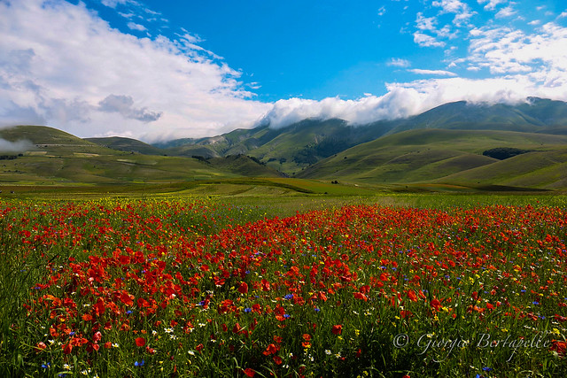 Walking near the flowers in a green valley...