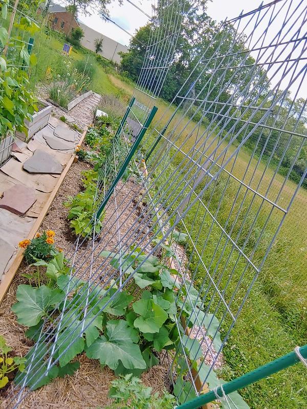 The squash garden bed