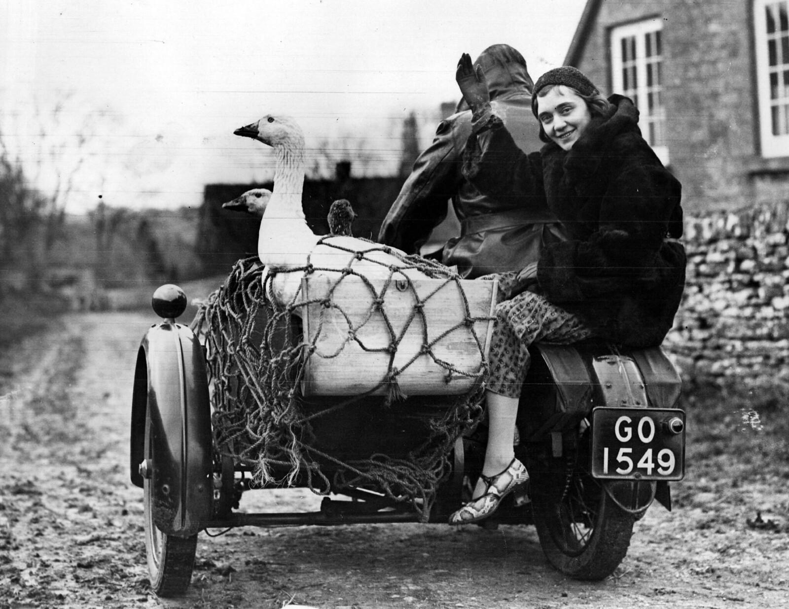 Гуси отправились в последний путь в окрестностях Челтнема. Для них это совсем не «веселая поездка», потому что они отправляются на рынок, а их конечный пункт назначения - рождественский обеденный стол. 19 декабря
