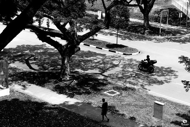 Tree shadows - Singapore
