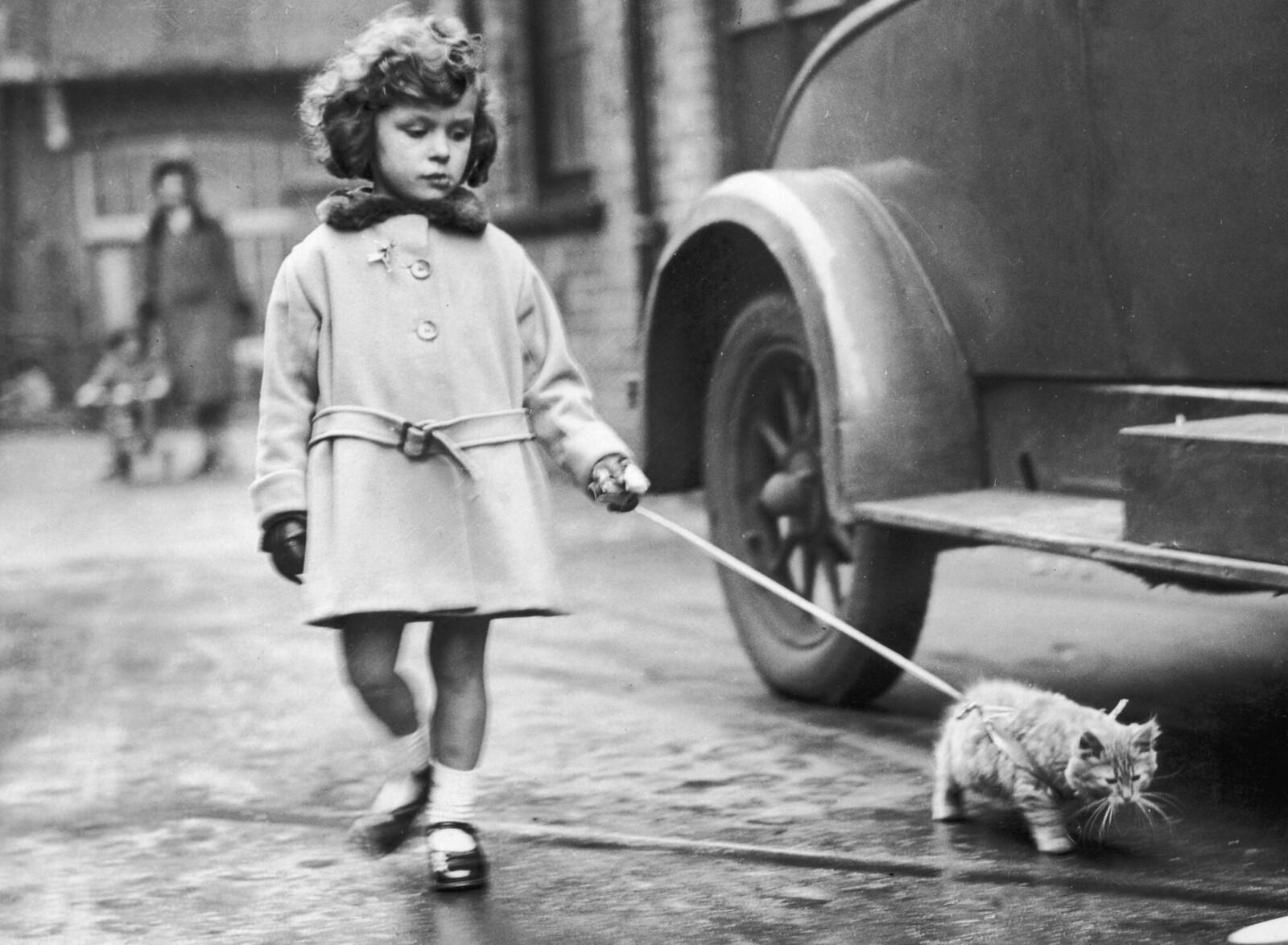 1931. Юная участница со своим котенком на поводке на выставке Национального клуба кошек в Кристал Пэлас, Лондон. 2 декабря