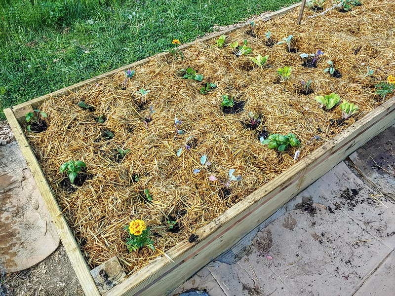 The leafy greens bed, planted