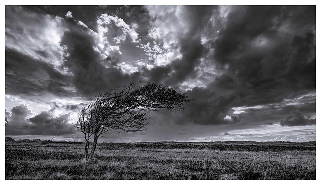 Storm lashed