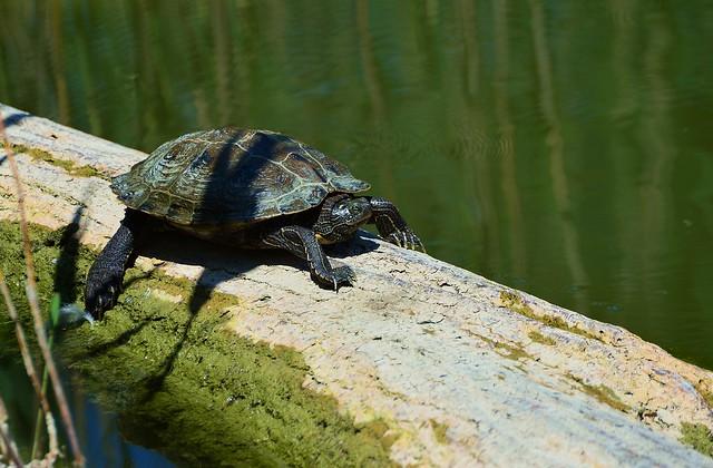 Munich - Turtle