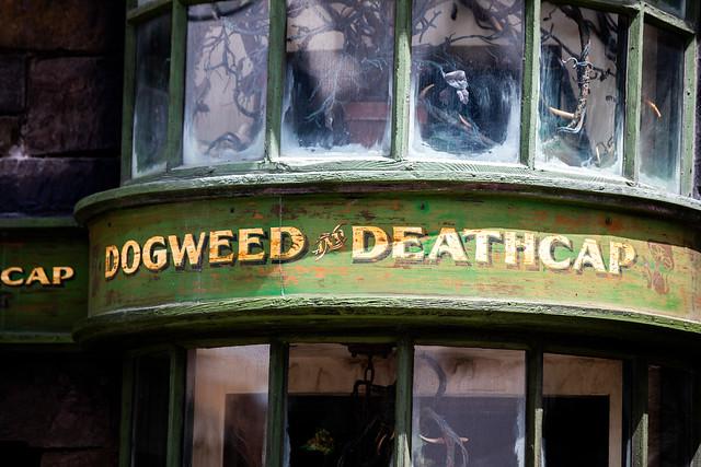 Dogweed Deathcap