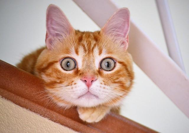 Happy Caturday! 😺