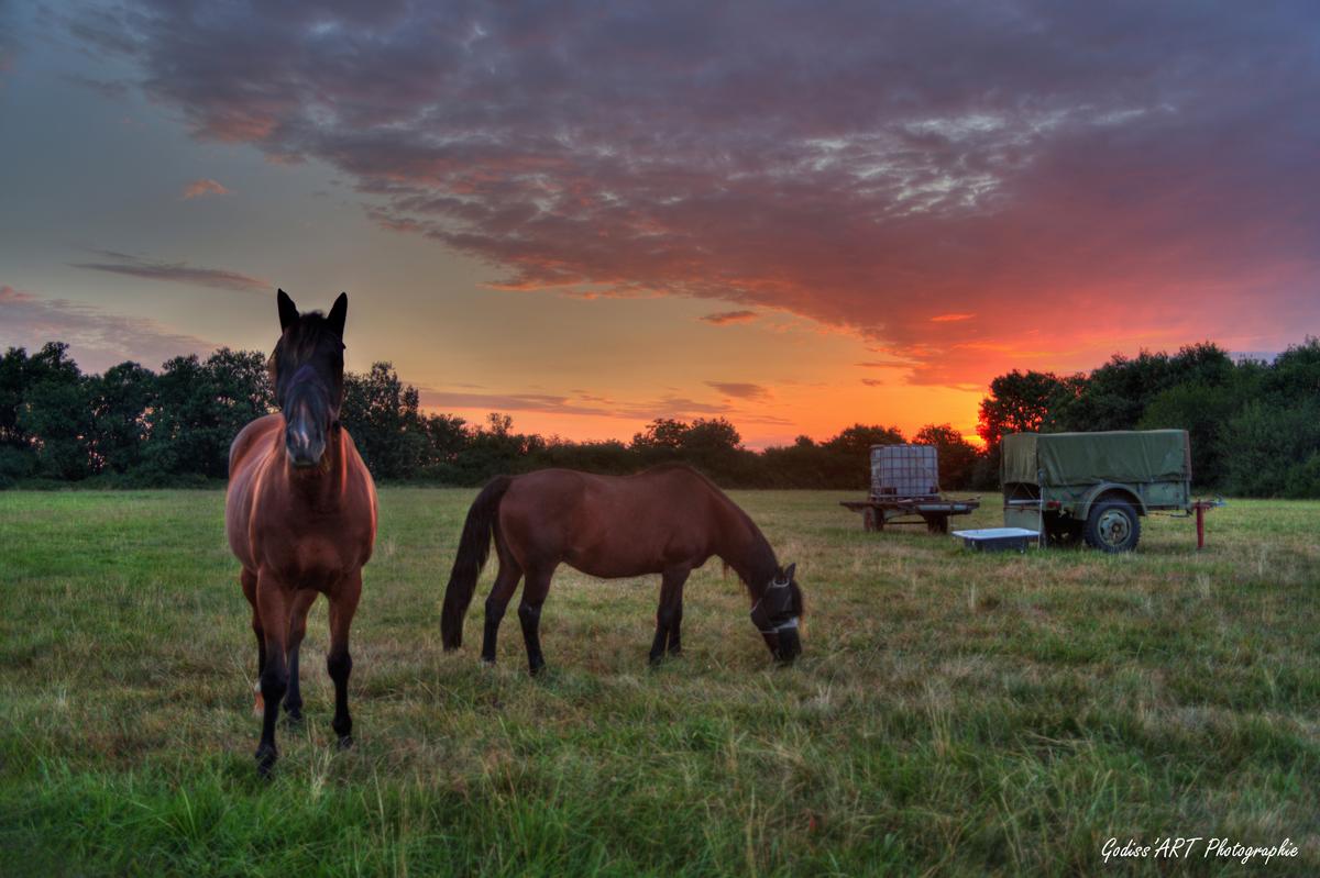 A l'aube des chevaux 50254560671_1b02fc82da_o