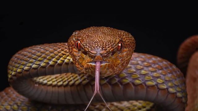 5721 Sahabi Rasool S.A.W died after killing a snake who was a Jinn 01
