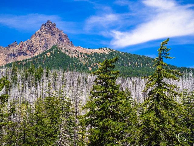 The Ghost Forests of Three-Fingered Jack