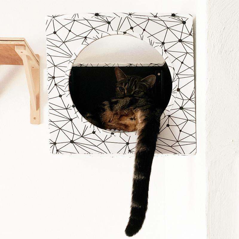 Lola in the Box