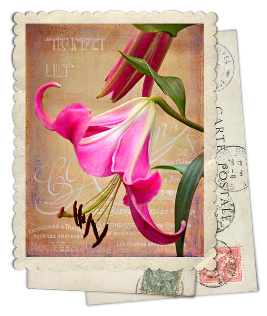 Trumpet Lily Vintage Card