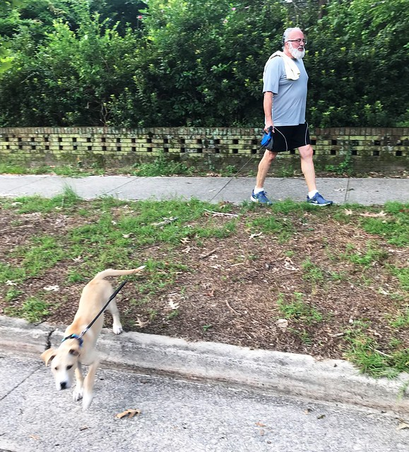 Shandon dog9.4