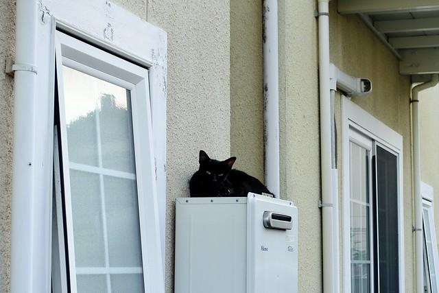 Today's Cat@2020ー08ー22