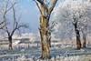 Das Sofrawäldchen im Winter 2013 - wie eine Märchenkulisse