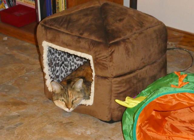 Kiwi in her Little House