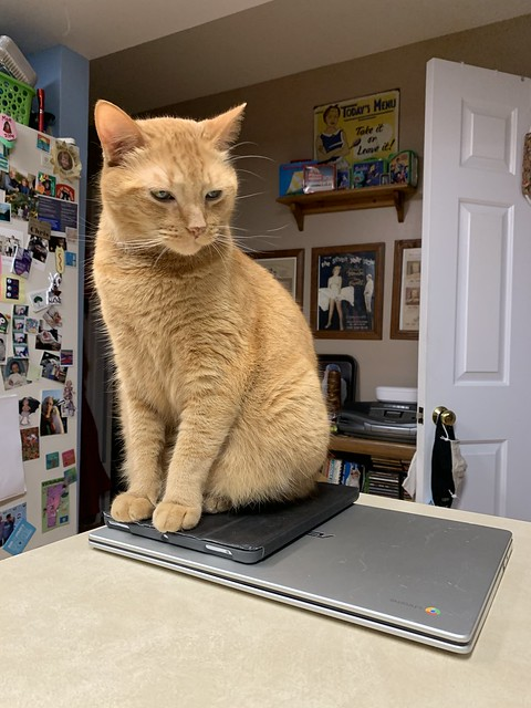 2020 235/366 8/22/2020 SATURDAY -  In the brain of STEVE! this is not sitting on the counter. He knows he's in trouble and won't make eye contact but he's hard purring like an idiot.