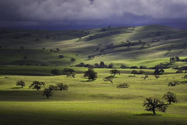 California Oak Savannah